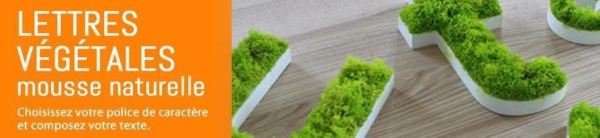 Lettres végétales découpées en mousse naturelle stabilisée | Lettrage